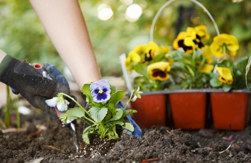 hands-planting-flowers-in-garden-2