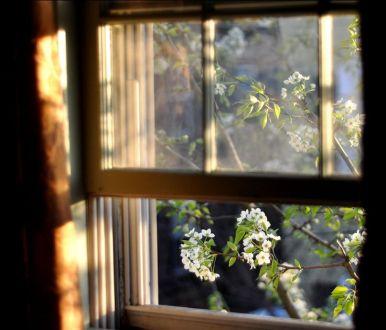 aajkal window